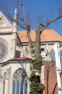 Remove Branch from Tree - Saint Mary's Cathedral Basilica of the Assumption - Covington KY - Gregory Forrest Lester, Inc.