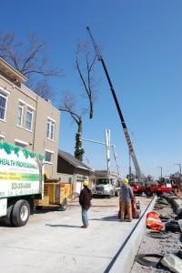 Cincinnati Tree Service Oh Ky In Gregory Forrest Lester