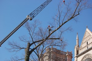 Cincinnati Removing Branches and Tree - Gregory Forrest Lester