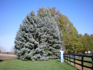 Spraying-Evergreen-Tree-Gregory-Forrest-Lester