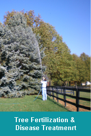 Tree Fertilization & Tree Disease Treatment