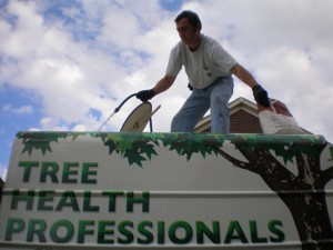 Cincinnati Tree Fertilization
