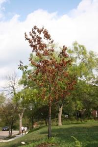 Tree Under Stress