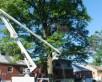 Cincinnati Tree Trimming