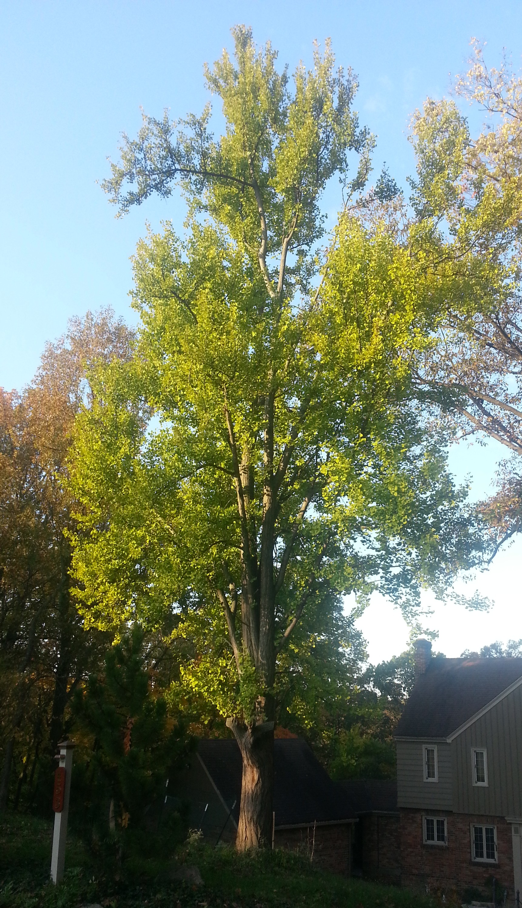 Fall Tree Fertilization in Cincinnati