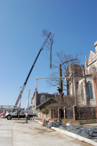 Crane-Lifting-Branch-while-Removing-Tree-Saint-Marys-Cathedral-Basilica-of-the-Assumption-Covington-KY-Gregory-Forrest-Lester