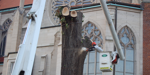Tree Removal beside Saint Mary's Cathedral Basilica of the Assumption - Covington, KY - Gregory Forrest Lester